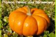 Польза и вред тыквы для организма человека